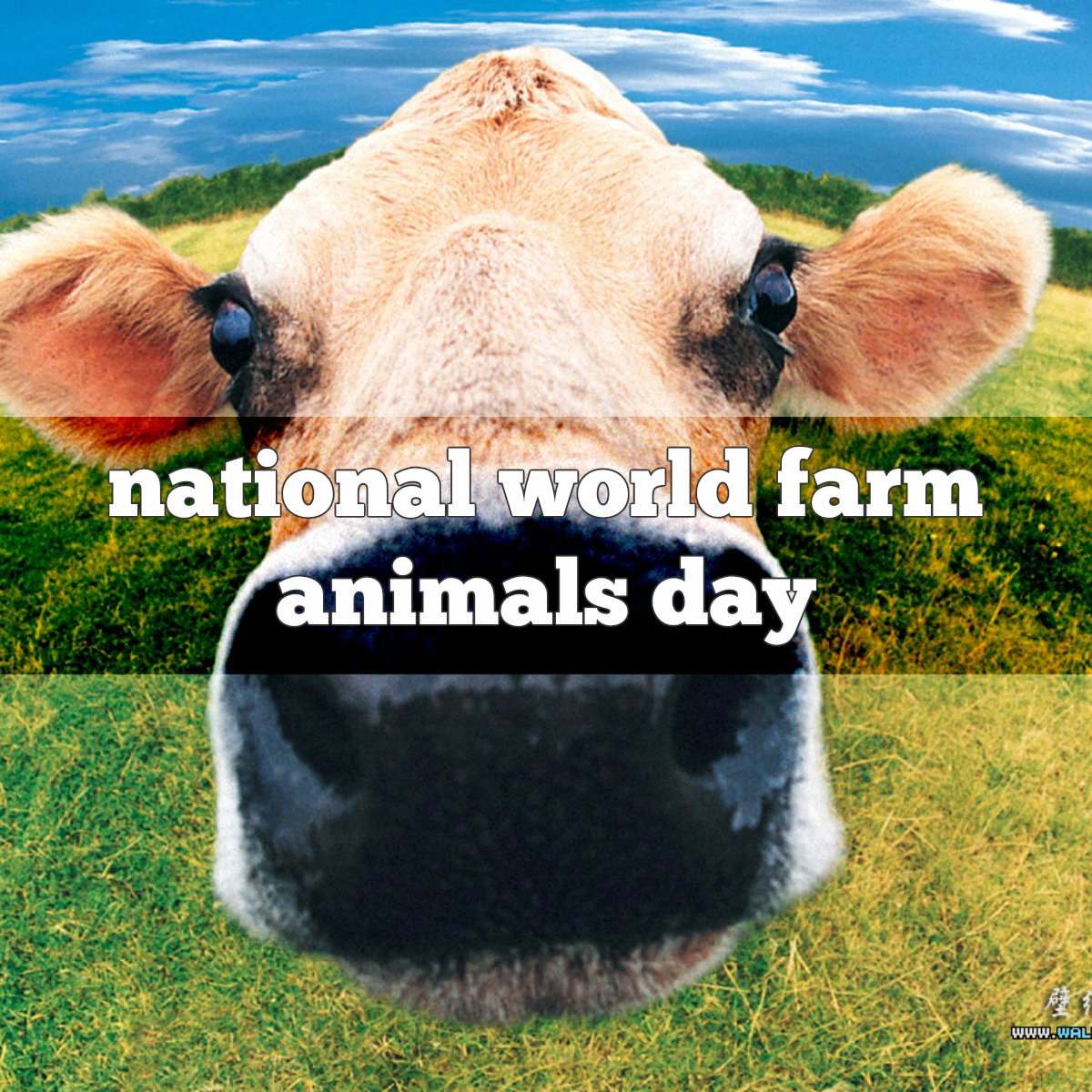 October 2 Is National World Farm Animals Day Foodimentary National Food Holidays