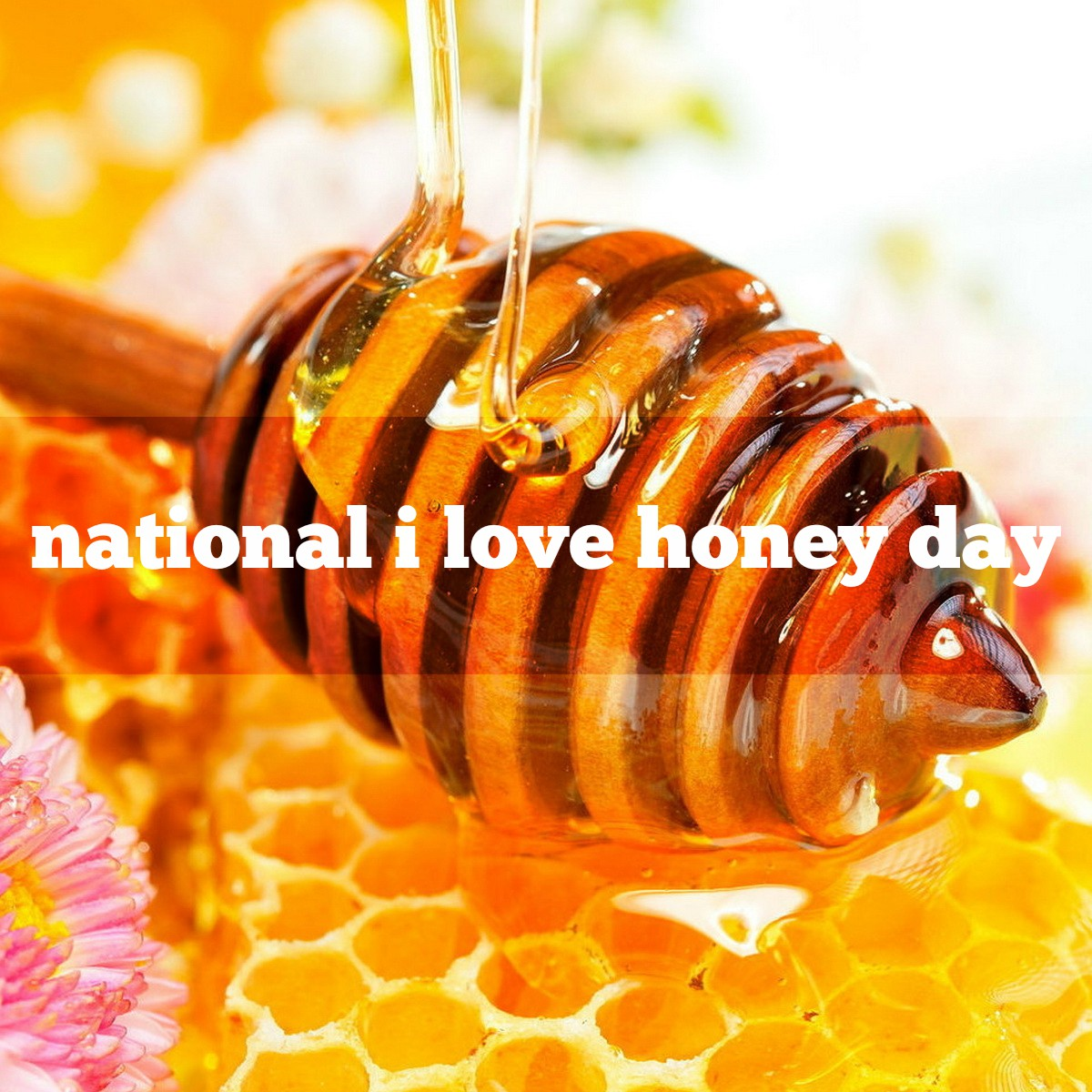 Image result for National I love honey day