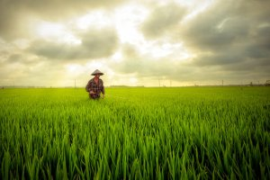 another_rice_field_by_garki-d5yz59p