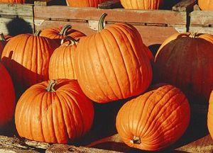 350px-pumpkins