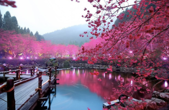 japanese-sakura-lake