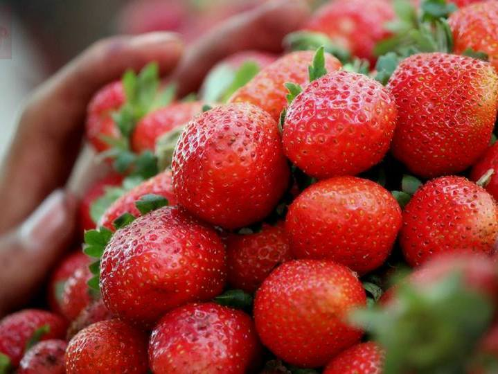 strawberries_for_sale_at_mahabaleshwar
